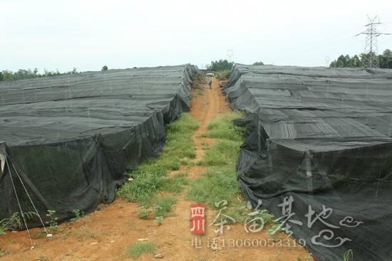 三鑫苗业注册资金六百万